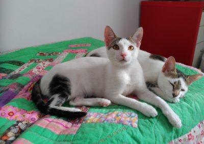 Kate und Kitty