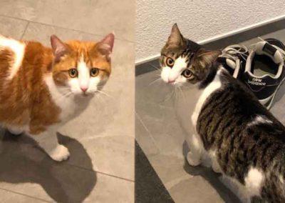 Garfield & Kimba